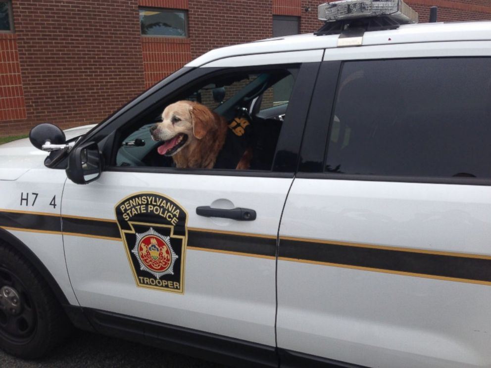 PHOTO: Mr. Molson, a 12-year-old golden retriever with terminal cancer, has been making memories with his owners in Red Lion, Pennsylvania, while living out his final months.