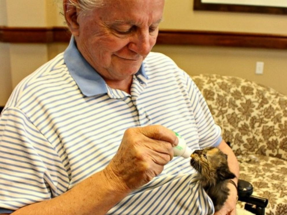 PHOTO: Memory loss residents at Catalina Springs Memory Care Facility in Oro Valley, Arizona, are now caring for kittens in their new Bottle Babies program.
