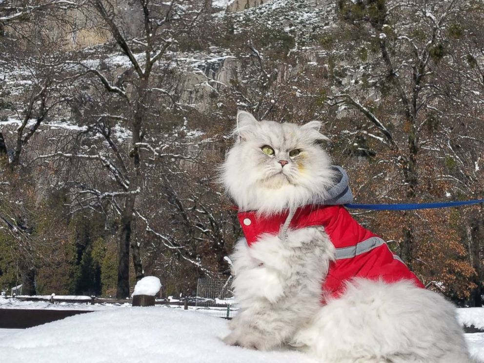 PHOTO: Gandalf the Majestic Cat Loves Traveling the World on His Leash