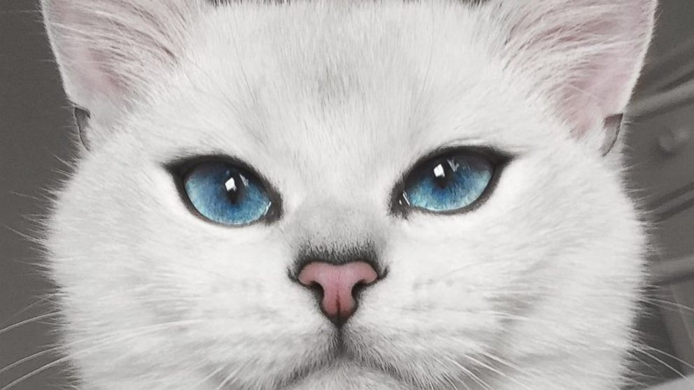 Fluffy White Cat With Blue Eyes