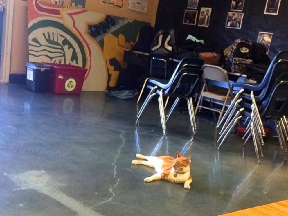 PHOTO: Bubba the cat is a well-known figure at Leland High School and Bret Harte Middle School in San Jose, California.