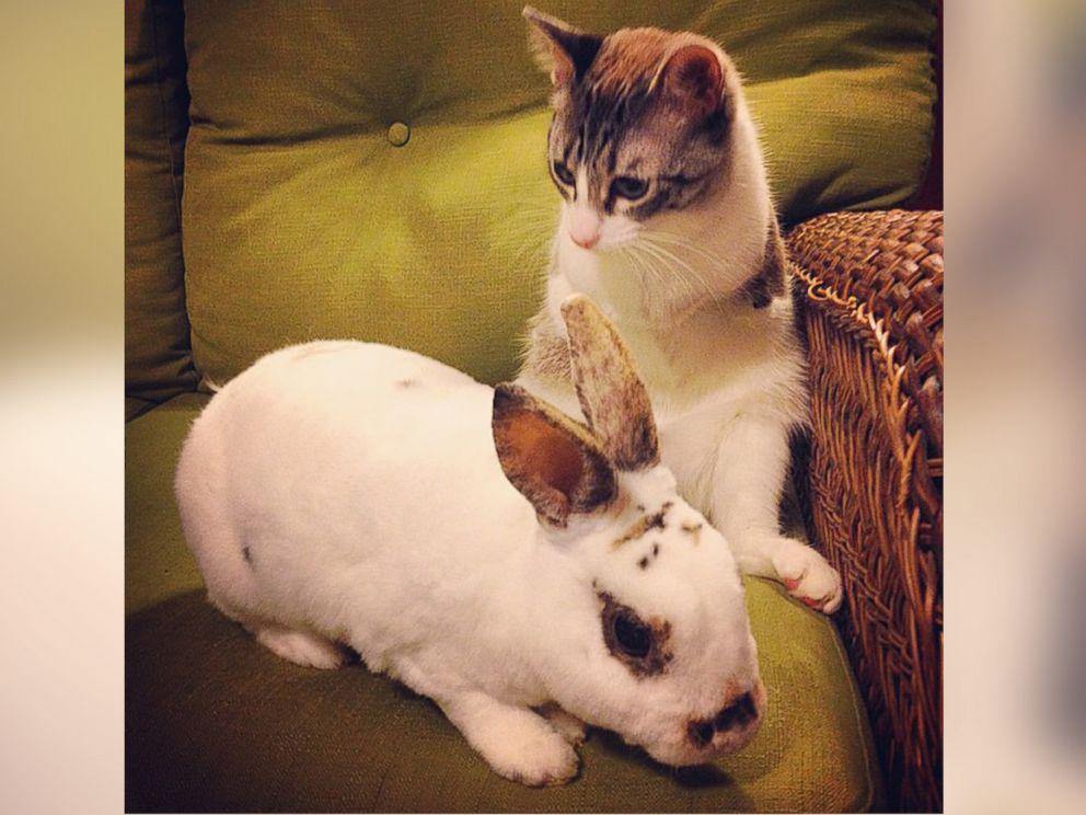 PHOTO: Roux the bunny kitty meets a real-life bunny rabbit.