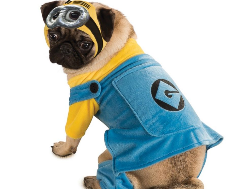 PHOTO: Minion Dog