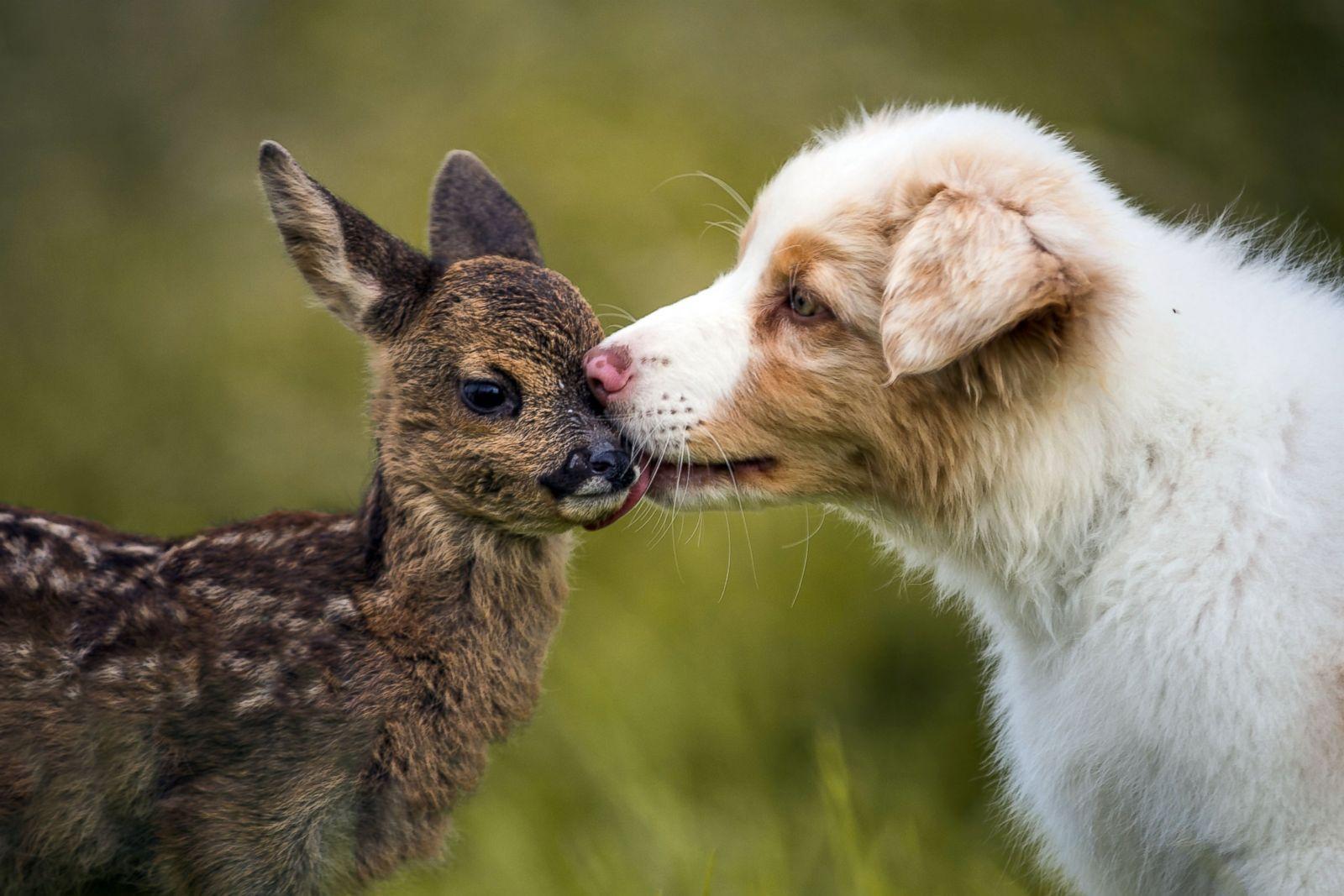 Happy cute animals