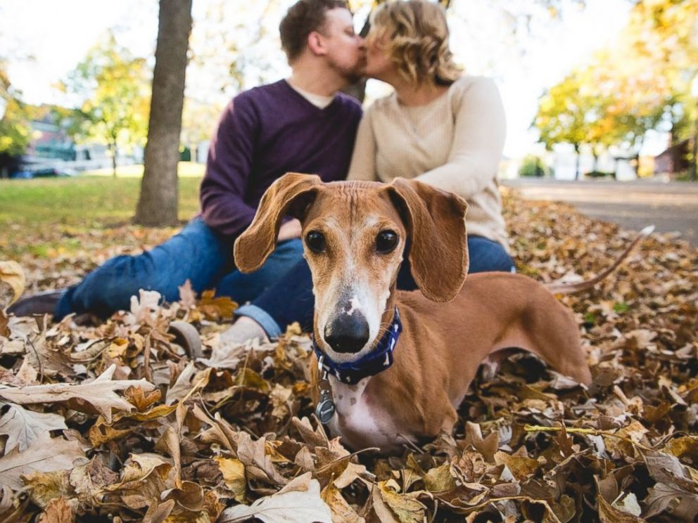 PHOTO: Louie the miniature dachshund was captured photobombing his owners, Megan Determan and Chris Kluthe, during their engagement photo session in St. Paul, Minn. on Oct. 13, 2015.