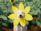 PHOTO: Gluta the dog.