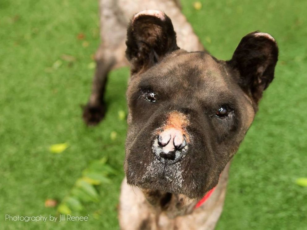 Neglected Dog Without A Nose Gets Dramatic Transformation
