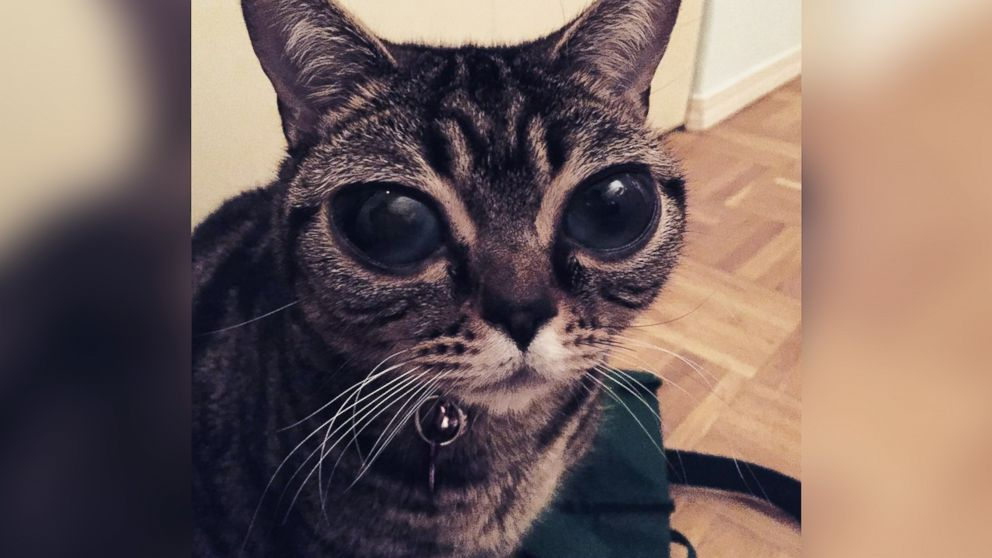 How Matilda, the Alien,Eyed Cat, Came to Have Her Celestial
