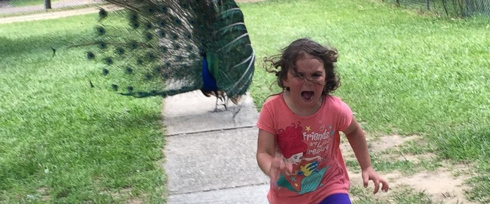 PHOTO: The Story Behind the Little Girl Running Terrified from Peacock