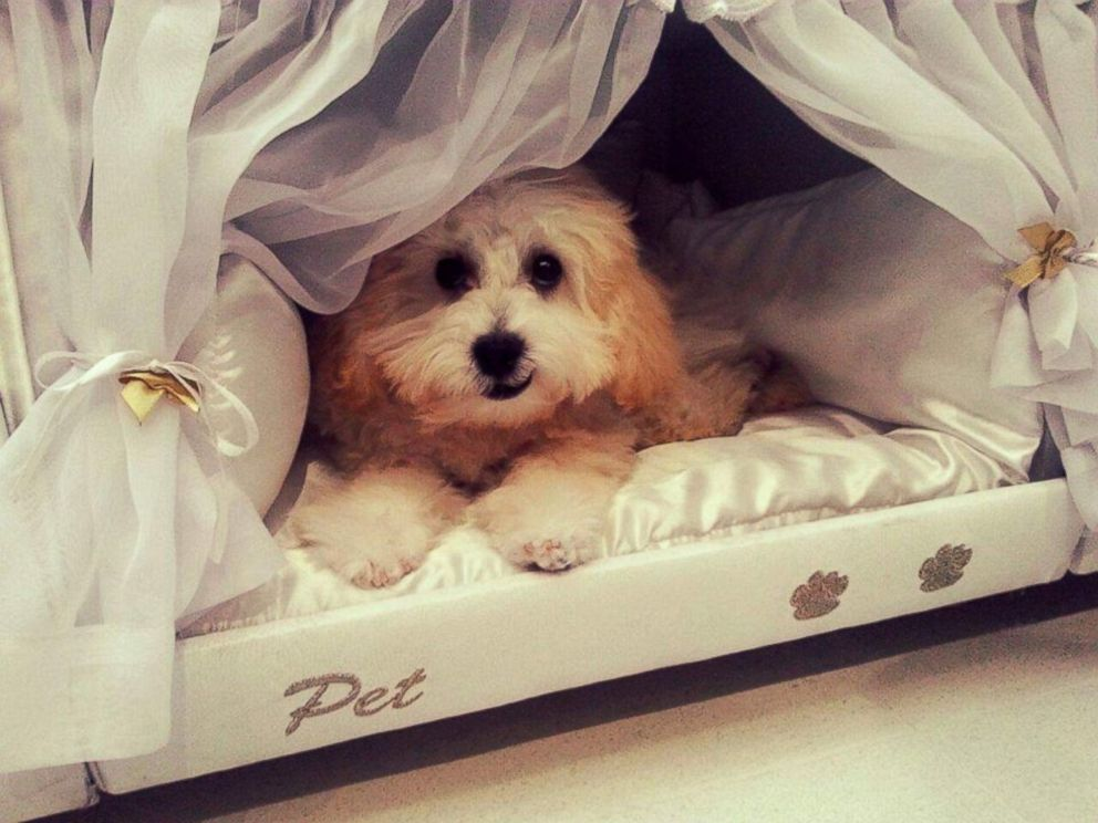 Brazilian Mattress Company Creates Bunk Beds For You And Your Pet