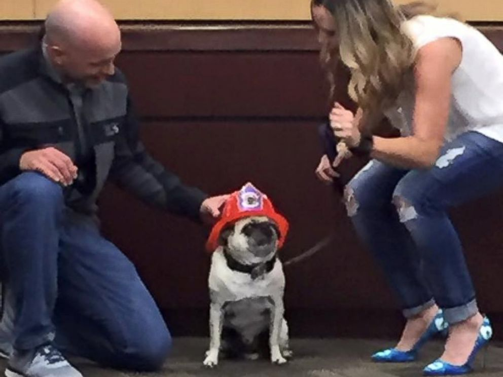 PHOTO: The mayor of Meridian, Idaho, awarded 11-year-old pug Jaxson with the City of Meridians Hometown Hero Award, Oct. 4, 2016.