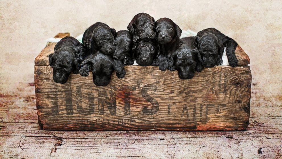 Puppies new baby Puppy 101: