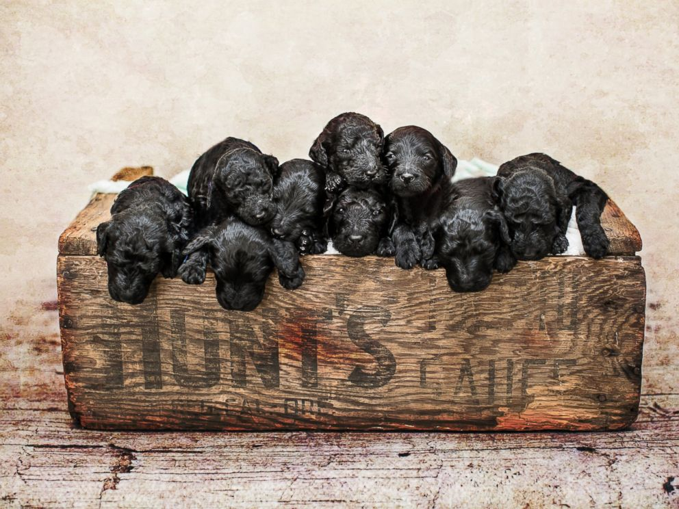 PHOTO: A mom gave birth to her son the same day her dog gave birth to a litter of nine puppies. Photographer Teresa Raczynski captured the ten of them when they were just one week old.