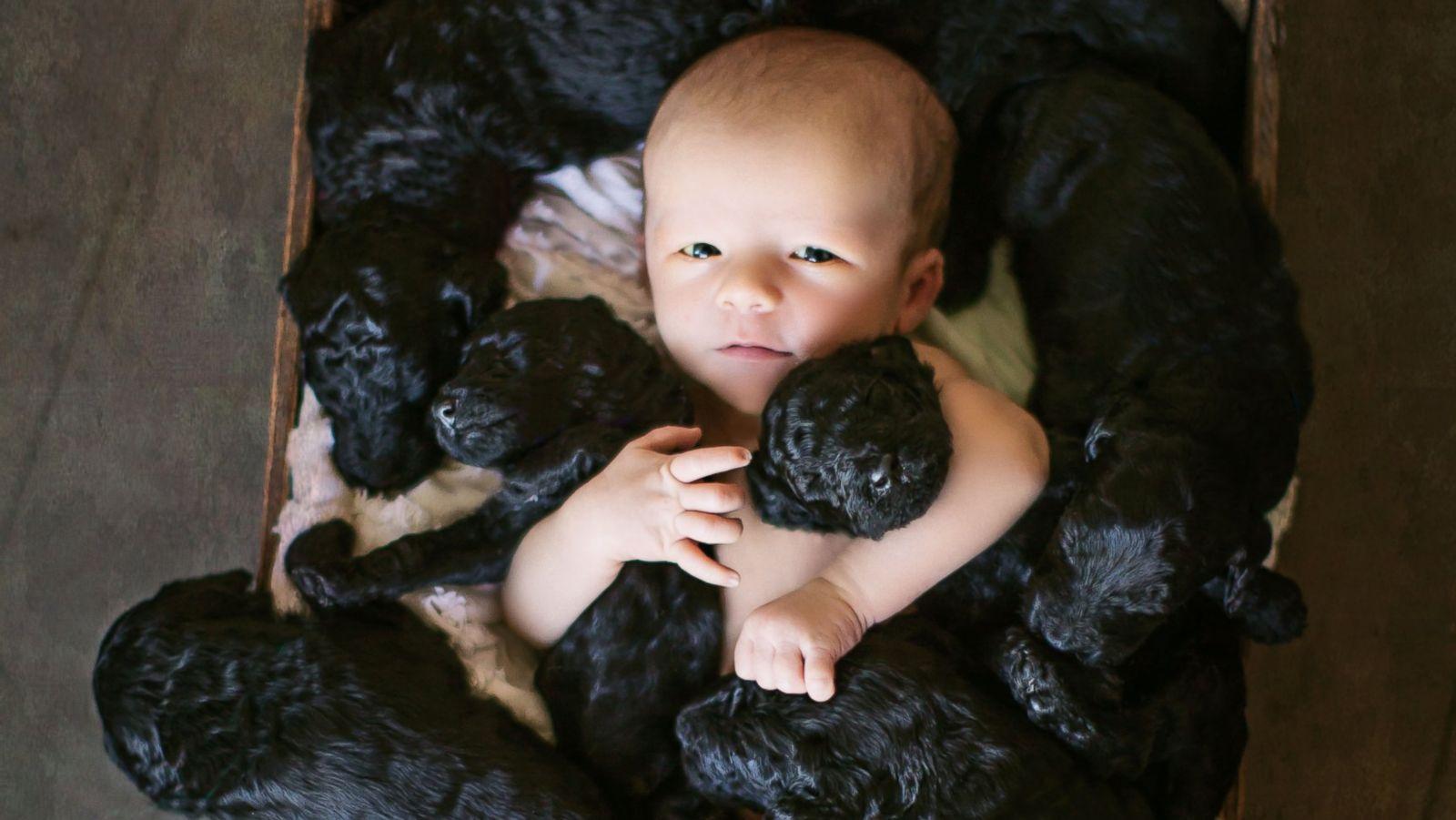 Baby puppies new Dog Adopts