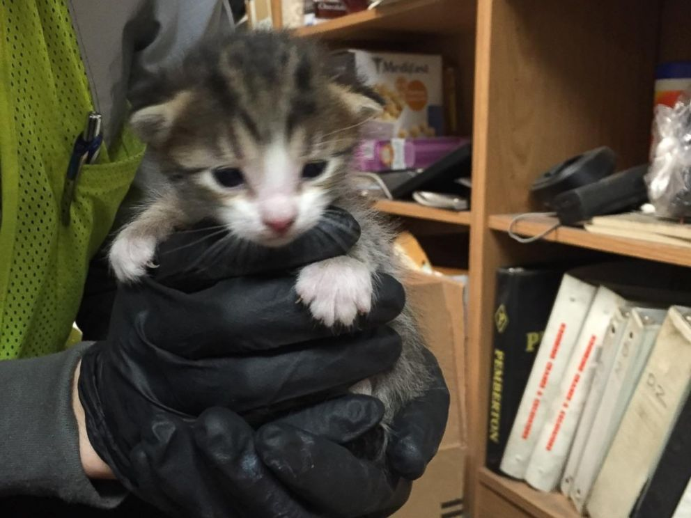 PHOTO: A kitten was rescued at a recycling facility in Galt, Calif. on Dec.15, 2015 and adopted by an employee.