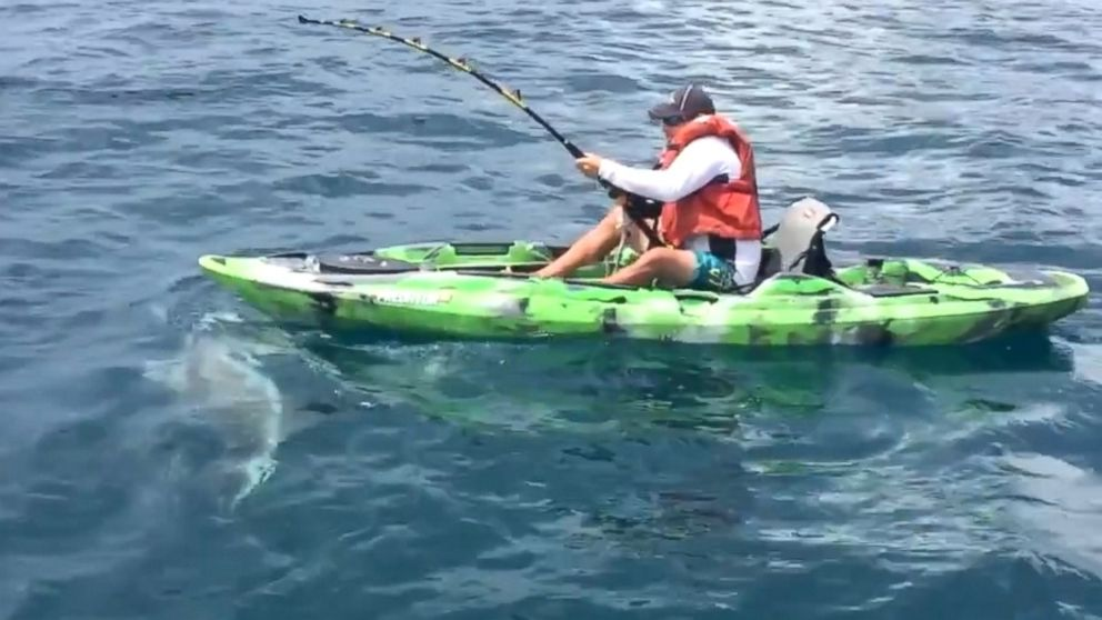 Watch What Happens After Angry Shark Capsizes Mans Kayak