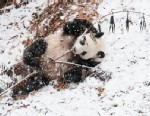 Snow Day at the National Zoo