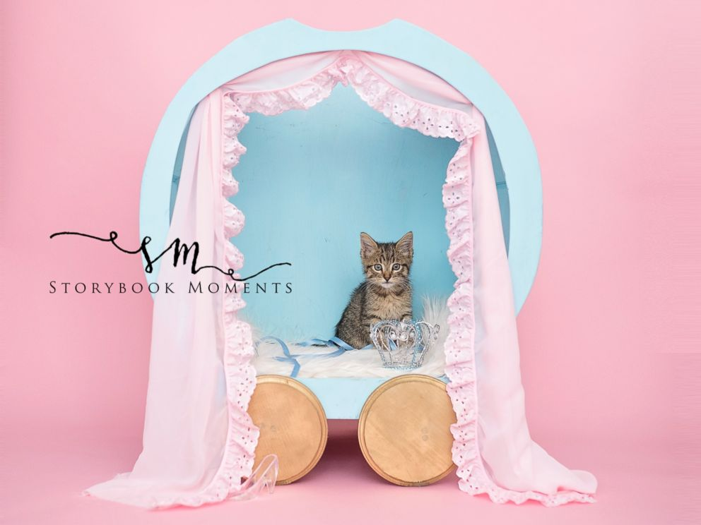 PHOTO: Stray Kitten Gets Princess Treatment in Magical Newborn Photo Shoot