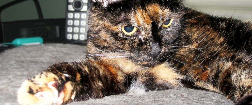PHOTO: Tiffany Two, the worlds oldest cat, has passed away.