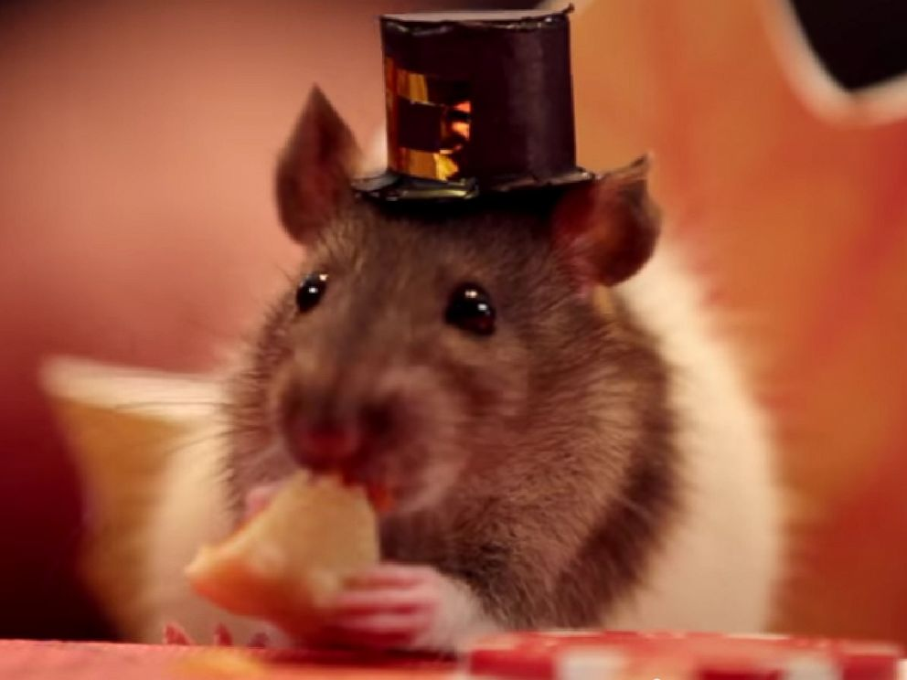 PHOTO: A tiny hamster eats a small-scale Thanksgiving meal in a video titled, A Tiny Hamster Thanksgiving (Ep. 4) posted to YouTube on Nov. 18, 2014.