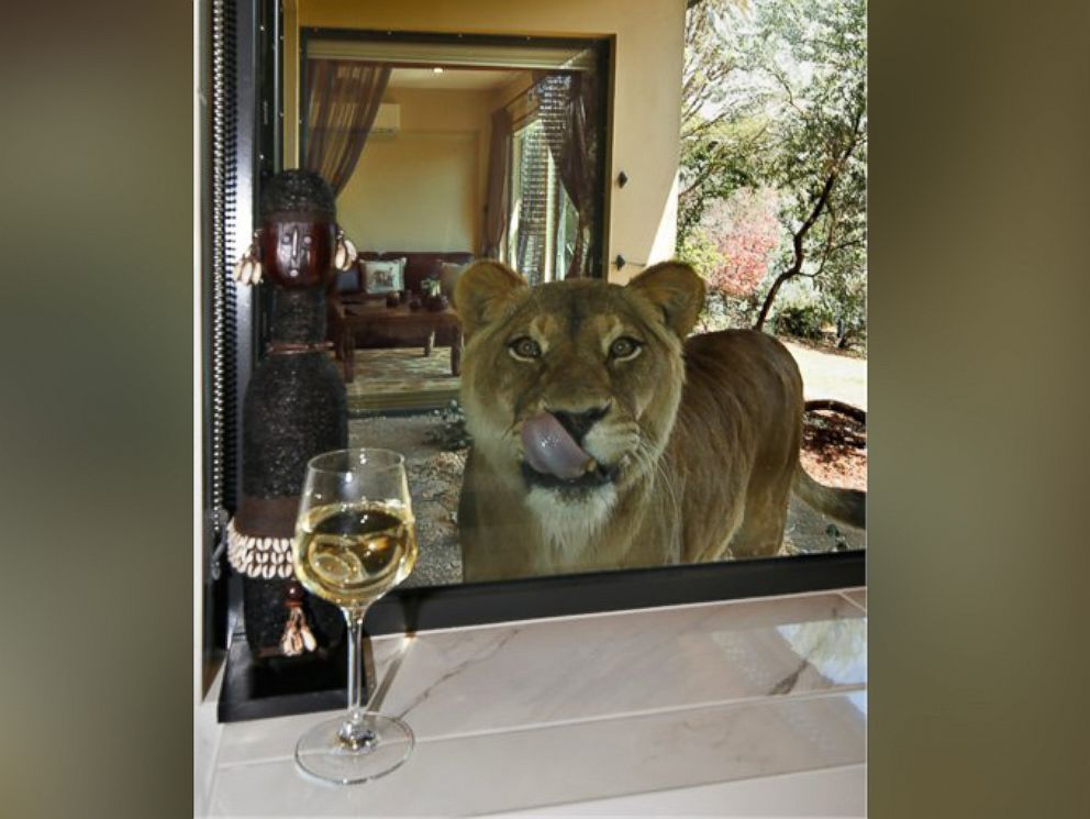 Photo The Jamala Wildlife Lodge In Canberra Australia Allows Guests To Stay Next