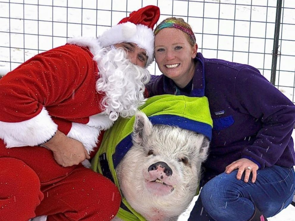 couple s 250 pound pet pig hams it up for the camera in their