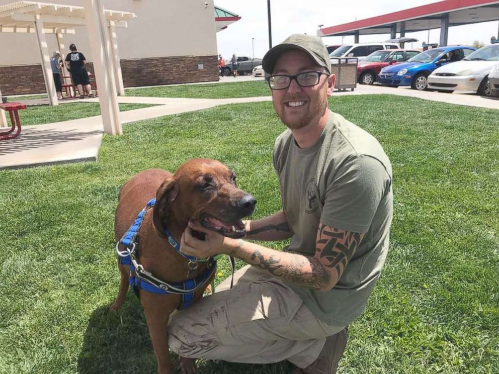 PHOTO: Jake, a 7-year-old Coonhound, was found in Pennsylvania and a group of volunteers worked to get him to his rightful home in Arizona.