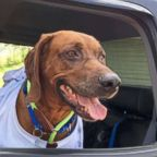 Jake, a 7-year-old Coonhound, was found in Pennsylvania and a group of volunteers worked to get him to his rightful home in Arizona.