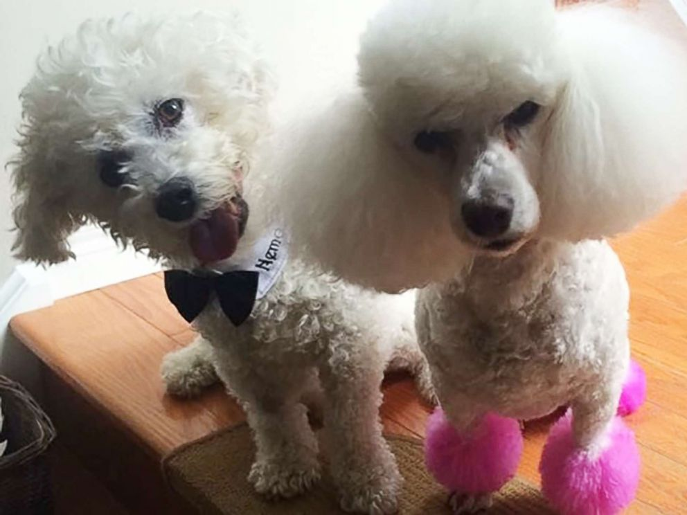 PHOTO: Xuereb s beloved dogs Nemo and Lucy passed away within two weeks of each other due to congestive heart failure.