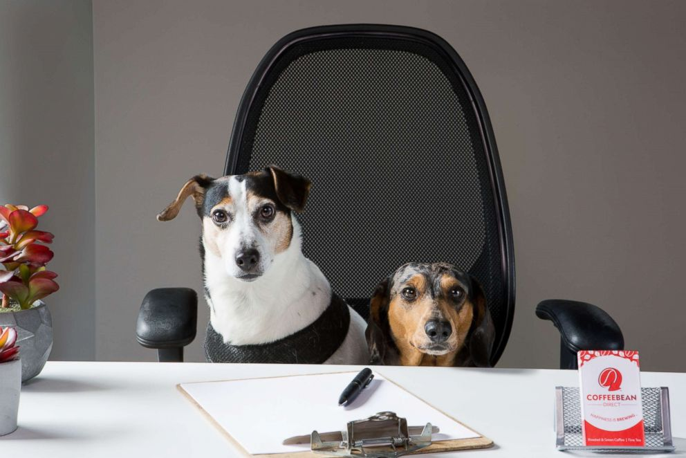 Americans celebrate 'Take your dog to work day'