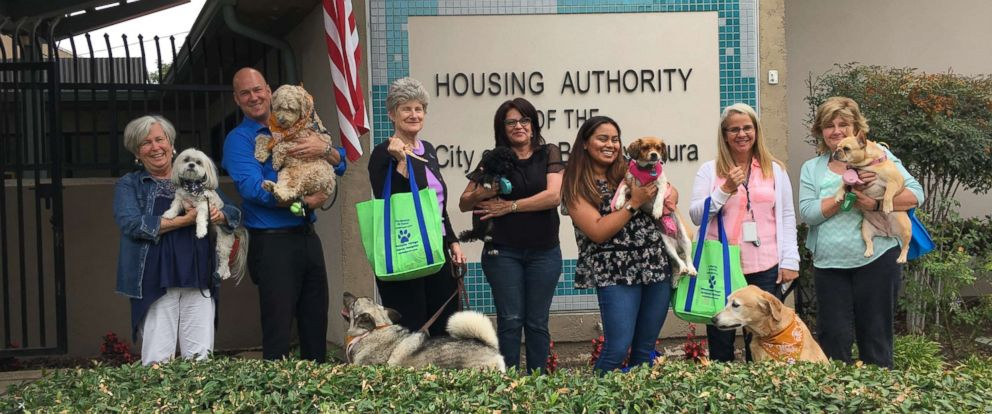 PHOTO: Coworkers show their dogs during Take Your Dog to Work Day.
