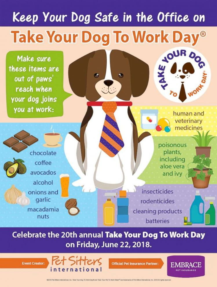 PHOTO: Pet Sitters International shares safety tips for Take Your Dog to Work Day.