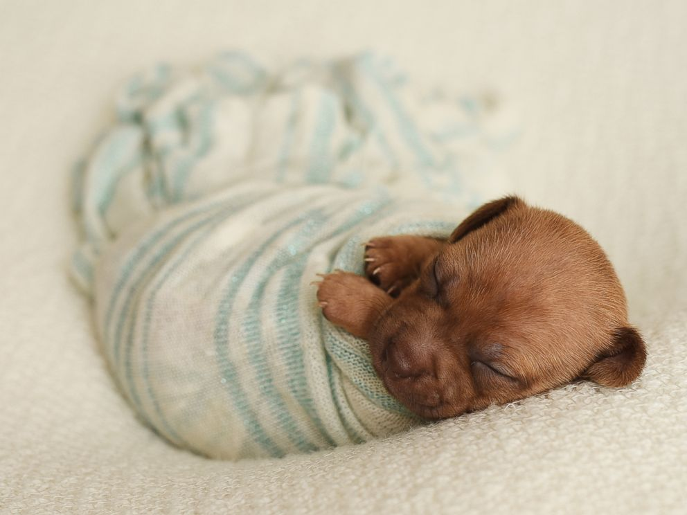 Photographer poses foster puppies like newborn babies to ...
