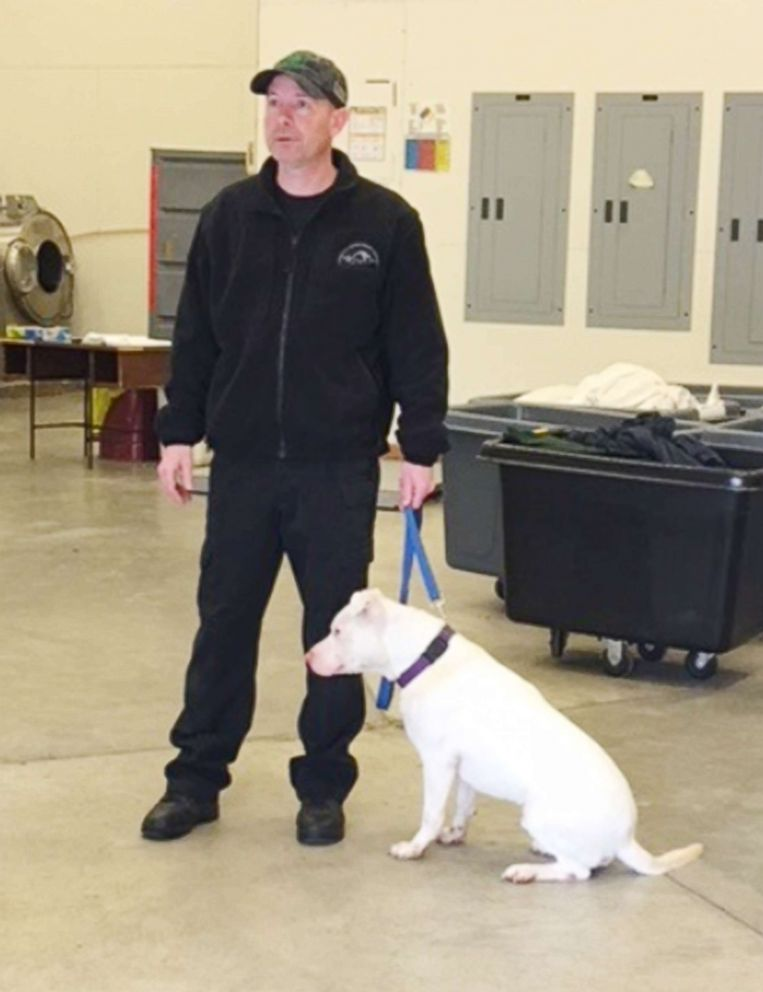 PHOTO: Ghost works alongside Joe Henderson, a K-9 handler for almost 10 years.