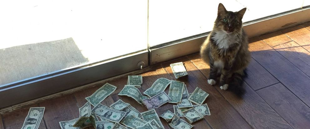"PHOTO: Sir Whines A Lot, also known as the ""Cashnip Kitty,"" snatches dollar bills from locals who offer the money through the slot on the door of GuRuStu, a full service marketing firm in Tulsa, Okla."