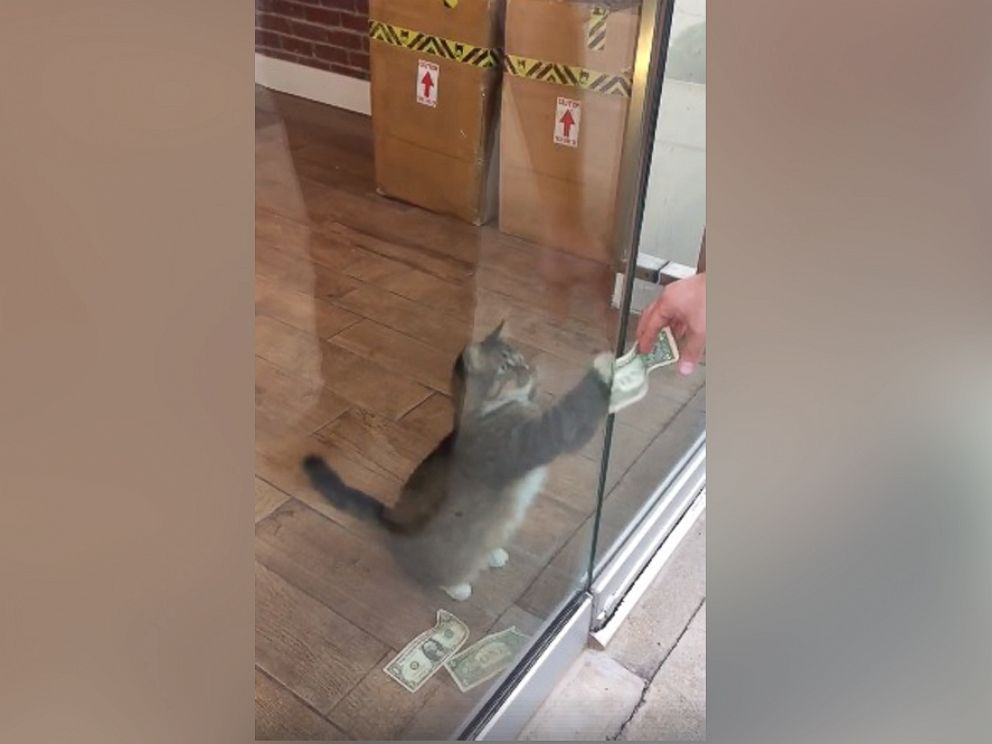 PHOTO: Sir Whines A Lot, also known as the Cashnip Kitty, snatches dollar bills from locals who offer the money through the slot on the door of GuRuStu, a full service marketing firm in Tulsa, Okla.