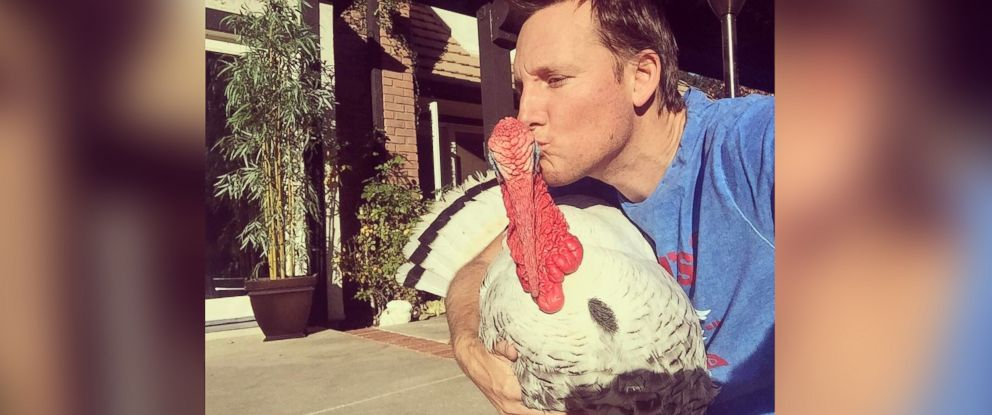 PHOTO: Albert the rescue turkey is living his best life.