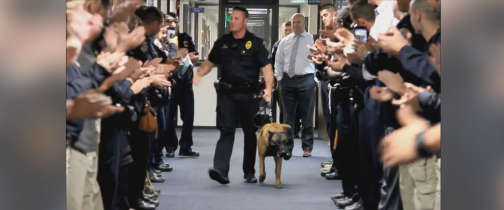 PHOTO: Bronx, a Belgian Malinois who worked on the SWAT team for the Bakersfield Police Department in California, was honored on Jan. 5 in a now-viral video.