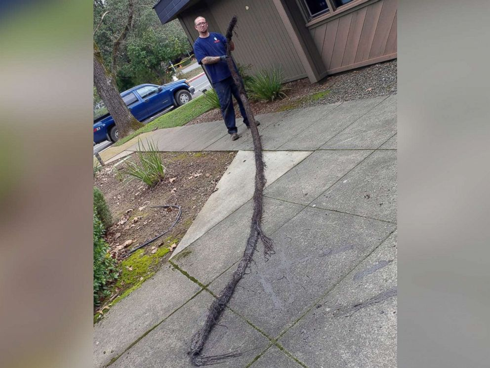PHOTO: This 12-foot-long mass was found clogging a drain in Spokane, Wash.