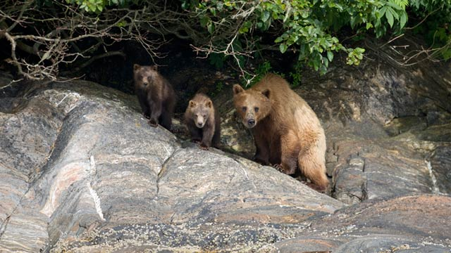PHOTO: Family of bears