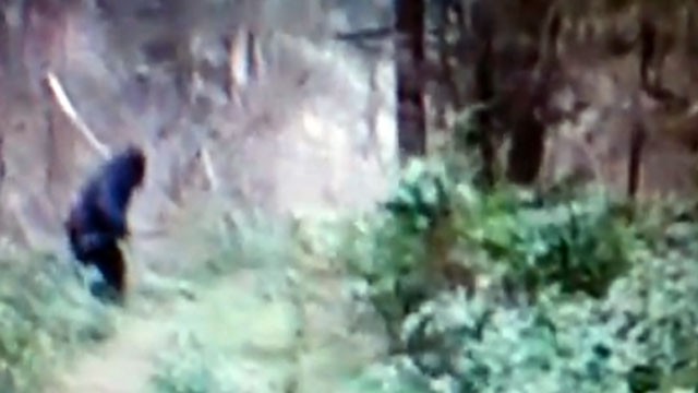 """PHOTO: In a video posted to YouTube by HowTo101Channel, a suspected """"Bigfoot"""" was seen running through the woods in Ohio."""