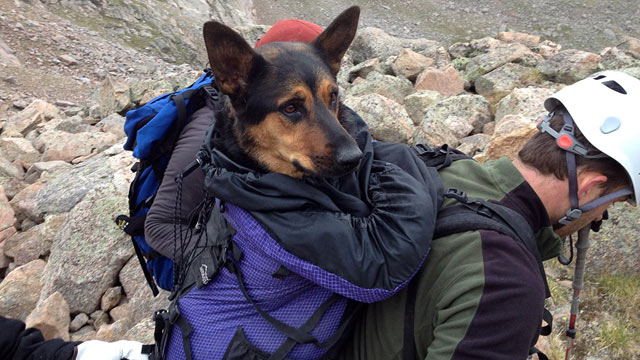 PHOTO: Missy, a 4-year-old German Shepherd stranded in the wild, was left for dead and saved by a group of eight hikers.