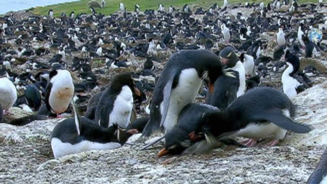 Robot Penguins Spy On Real