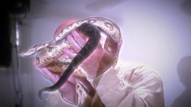 Snake-Handling Pentecostal Pastor Dies From Snake Bite - ABC News
