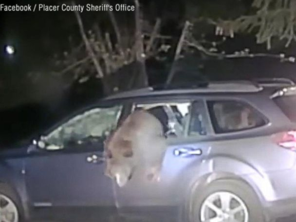 WATCH:  Bear gets freed after being trapped inside of a car