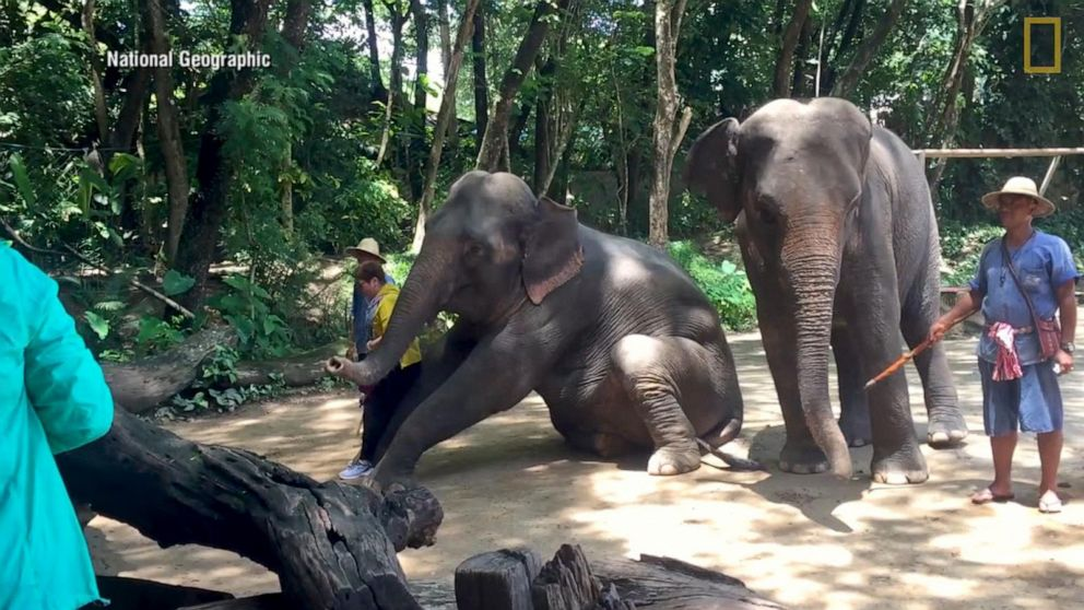 The darker side of captive exotic wildlife encounters for tourists