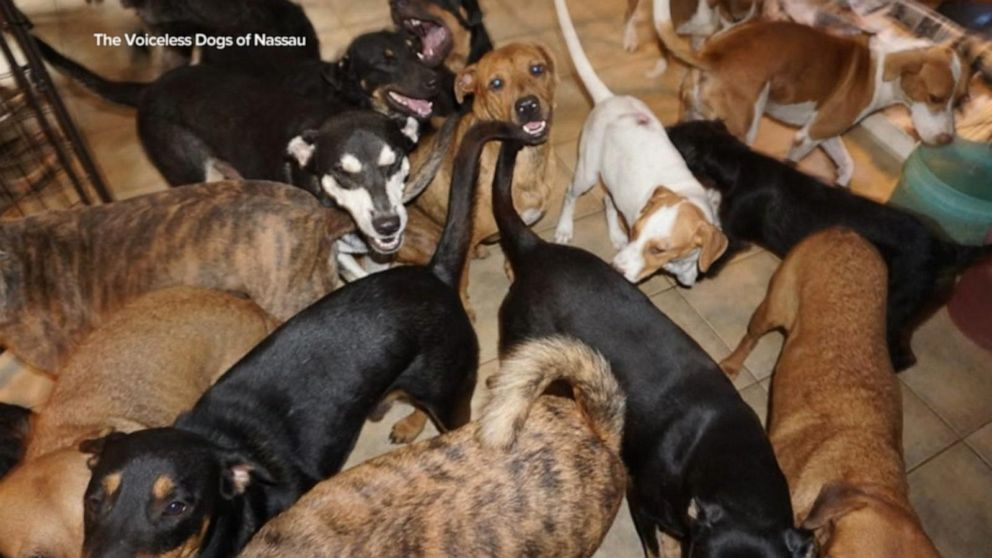 Woman shelters 97 dogs amid Hurricane Dorian