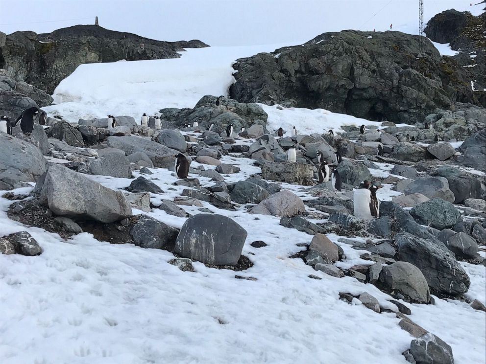 PHOTO: Penguins stand along the snowy rocks near a research center in Antarctica.