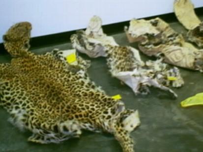 CSI: Animal Kingdom