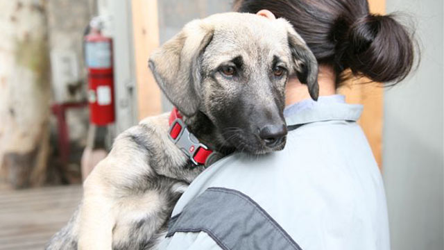 PHOTO: Athena, a stray dog, was found on a base in Kunar province in Afghanistan and adopted by U.S. soldiers.